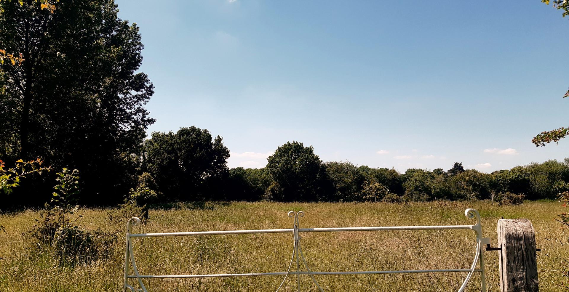 Hay Meadow Views
