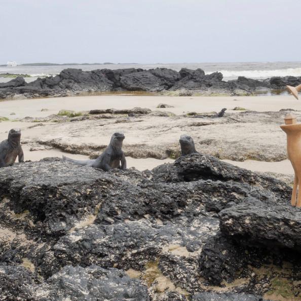 Galápagos Islands, Ecuador, 2019