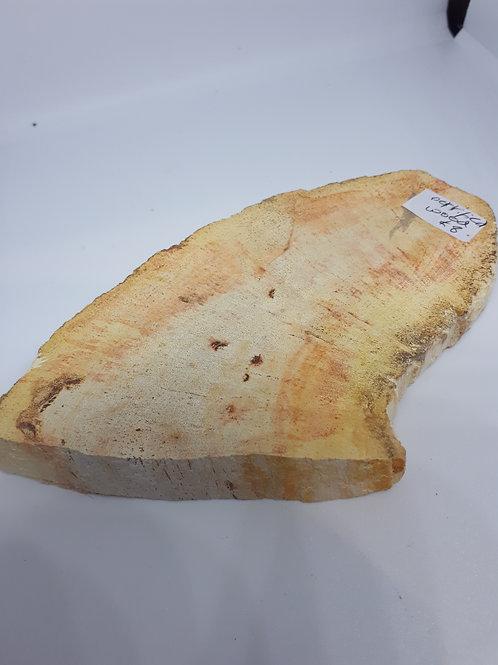 Fossiled fossil slab - polished