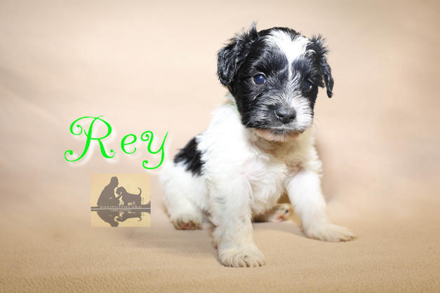 """Rey $3600 """"ADOPTED"""""""