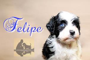 """Felipe $4000 """"ADOPTED"""""""
