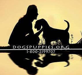 puppies1 copy.png