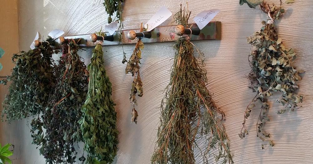 herbs drying.jpg