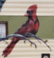 Ruby cardinal.jpg