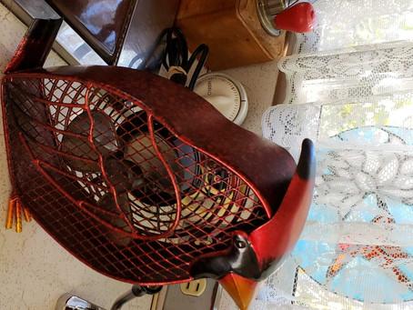 Cardinal fan arrives...