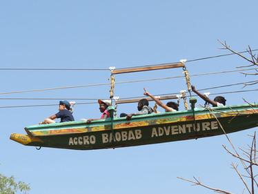 Les 6ème A dans les baobabs !