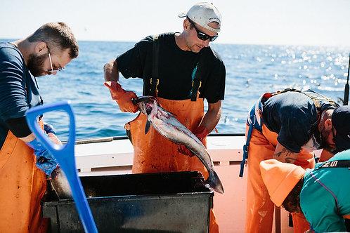Fish Fillets (10 Lbs) FRESH