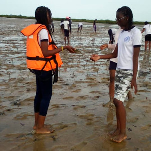 Les secondes L de Madame Ngom à la découverte d'un écosystème : la mangrove.
