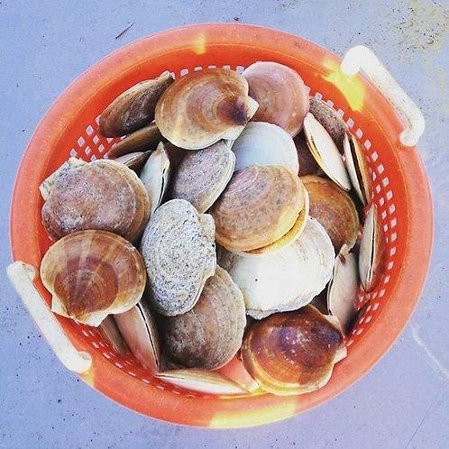 Sea Scallops  (4 Lbs )