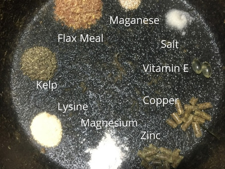 Thursday Thoughts: What is in your horses grain bucket?