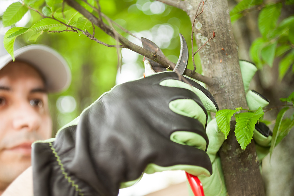 How Tree Services Near Me Can Result in Stunning Landscaping in Lexington, MA