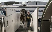 Конеперевозки по России и всему миру, доставка животных самолетом, перевозка лошадей в/из Европы, Америки, Азии. Брокерское обслуживание транспортировки лошадей. Ветеринарное оформление. Соблюдение всех норм. Коневозы. Перевозки лошадей дешево. Выезды на старты  дешево и эффективно. Обслуживание мероприятий с лошадьми