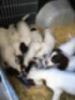 Перевозка собак за границу. Ветеринарные докменты. Таможенное оформление. Международные правила