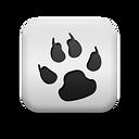 Перевозка животных по международным правилам в Армению, Грузию, Азербайджан, Турцию, Иран, Китай, Монголию, Корею, Японию, Малайзию, Сингапур, Австралию и Новую Зеландию