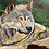 Thumbnail: Wolf Print - Multiple Sizes