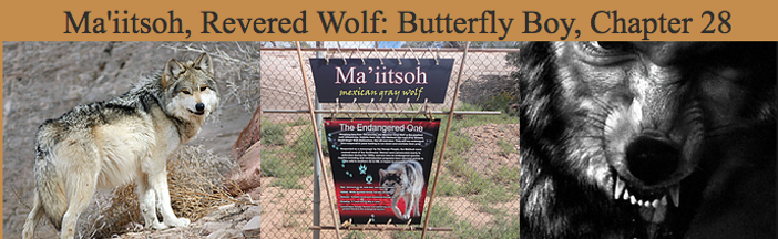 Ma'iitsoh, Revered Wolf