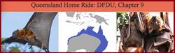 Queensland Horse Ride