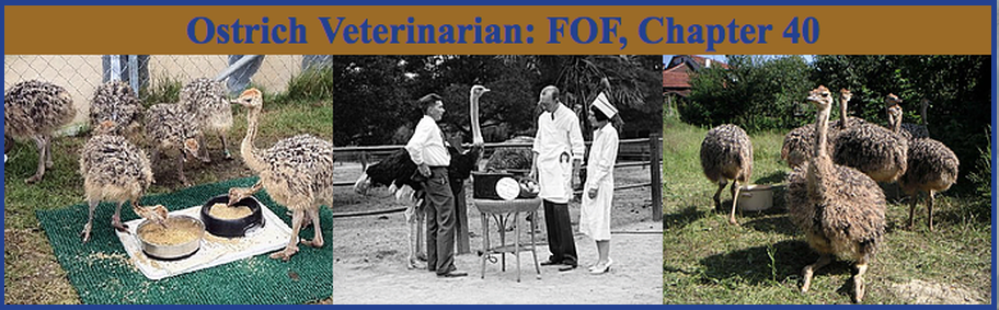 Ostrich Veterinarian