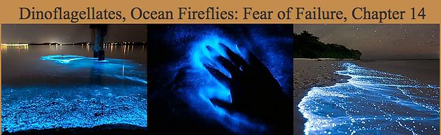 Dinoflagellates, ocean fireflies