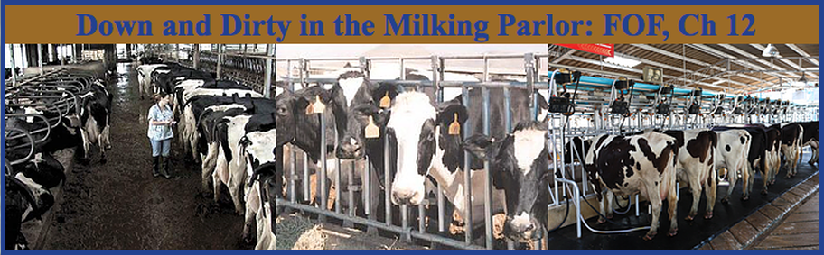 Down and Dirty in the Milking Parlor