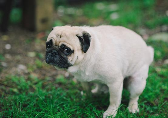 worried dog 2