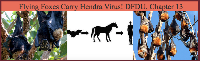 Bats Carry Hendra Virus