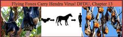 Bats Carry Hendra Virus