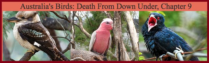 Australia's Birds