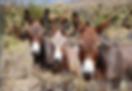 burro.png