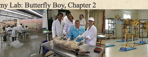 Animal & Veterinary Tales