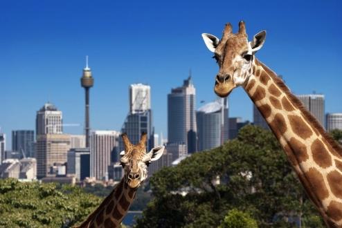 Taronga Zoo1