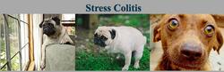 StressColitis