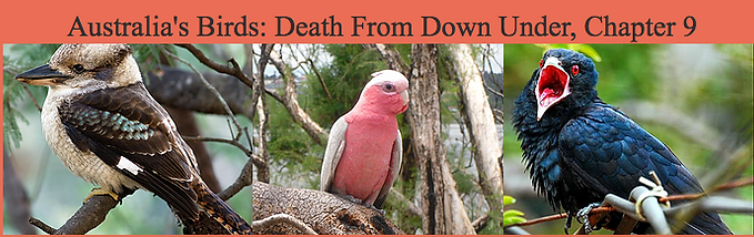 Austalia's Birds