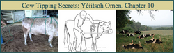 Cow Tipping Secrets