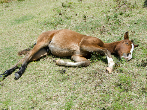 Yellow Foal