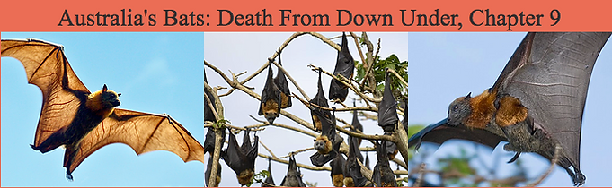 Australia's Bats