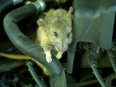 Prevent misfires and engine lights by stopping rodent intrusion,