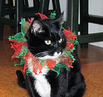 Grace_the cat.jpg