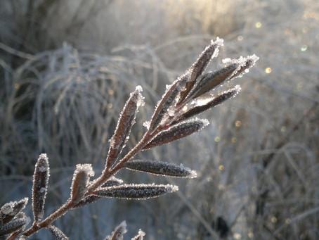 Fyllda frysar & 8 månaders oplock