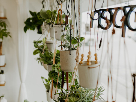 Plant Care | Keeping your plants warm in Winter