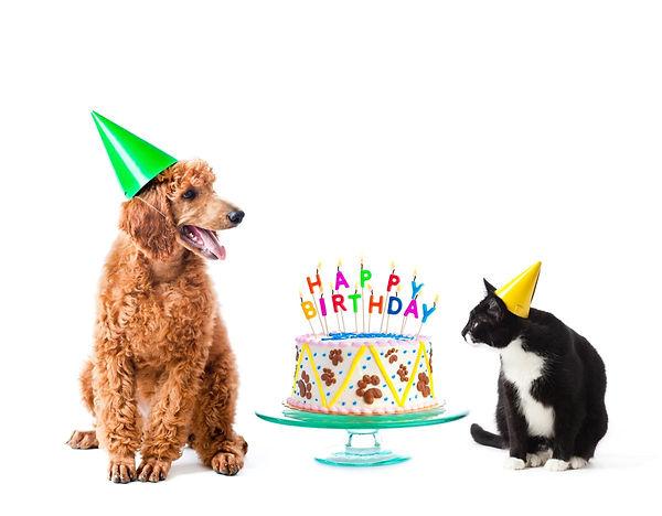 dog and cat birthday.jpg