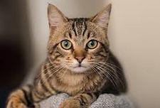 sylvester the sassy cat.jpg