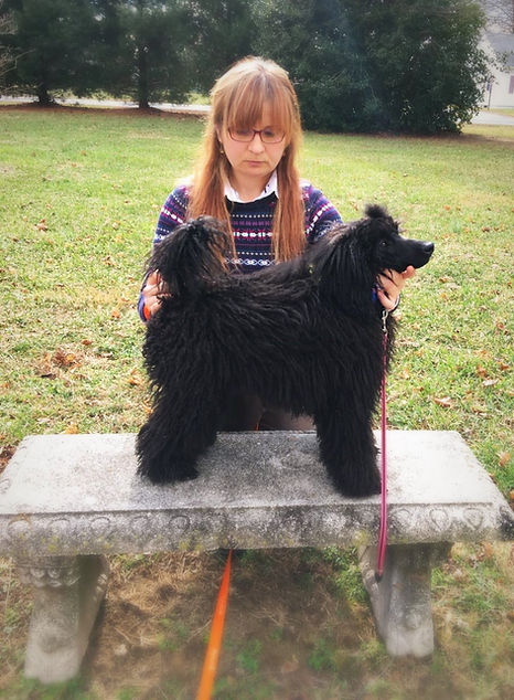 Quality Miniature Poodle