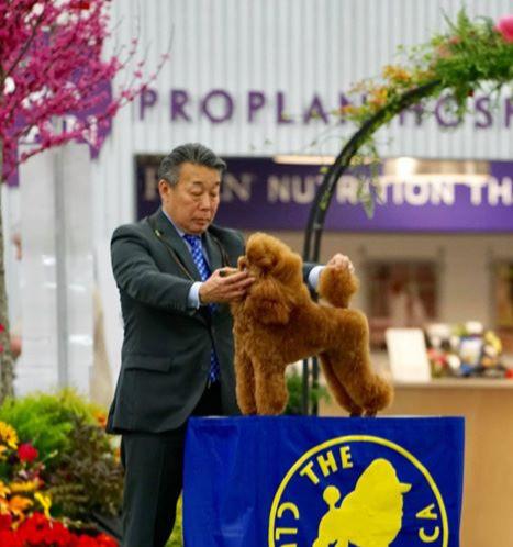 www.danubepoodles.com