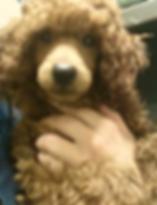 Poodle FUN