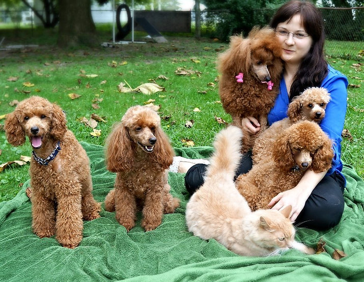 Natural Reared Miniature Poodles