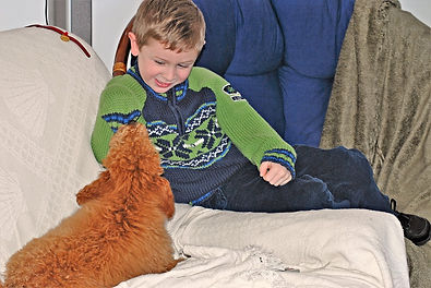 poodle socialization