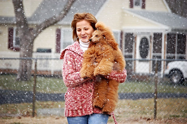 poodle and snow