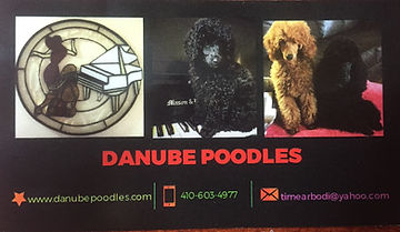 Poodle Buisness Card