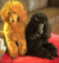 Poodle Love